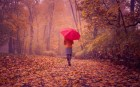 6987575-girl-red-umbrella-fall-road-nature
