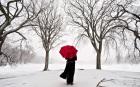 holiday_umbrella